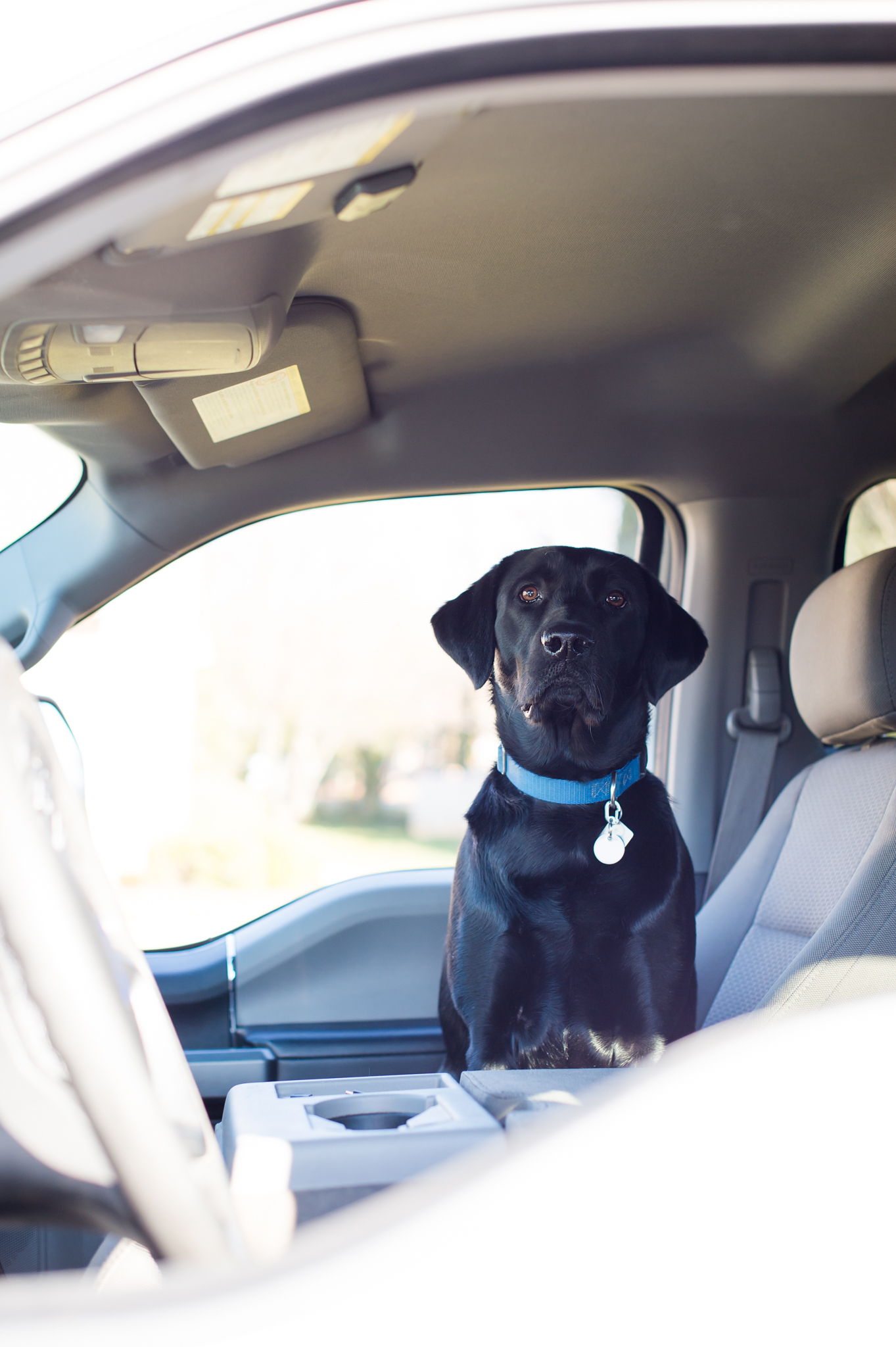 A black lab dog sits in the front seat of a truck.