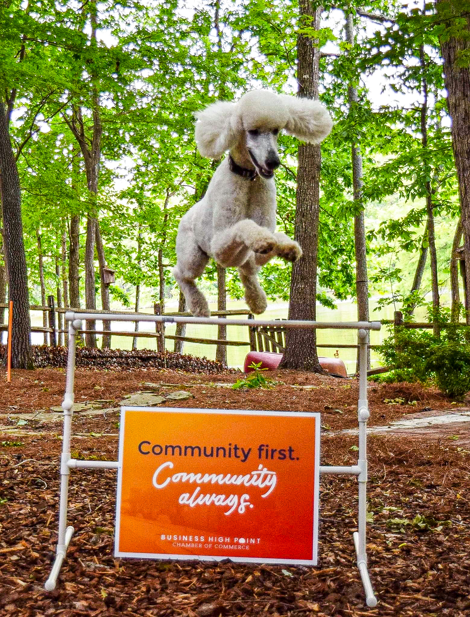 """A white poodle jumps over a hurdle that has a """"Community First. Community Always."""" sign on it."""