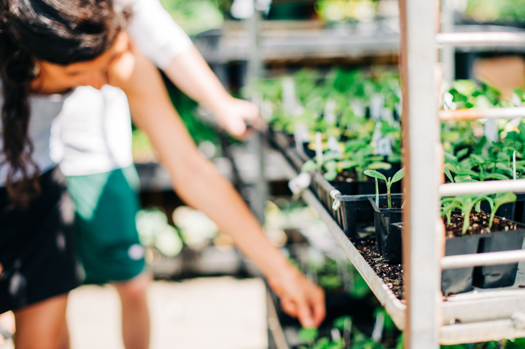 A woman reaches for a plant at Soviero's Garden Center in High Point, NC.
